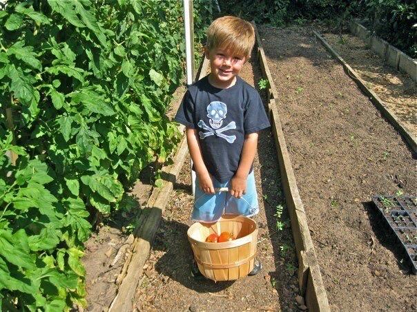 Child gathering vegetables