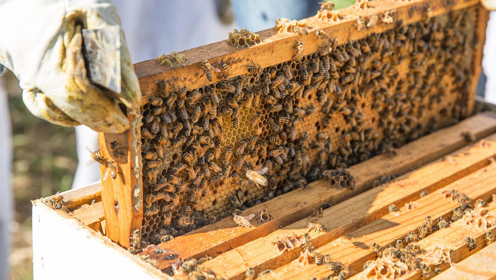 Beekeeping in Parker Colorado